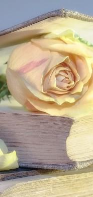 rose-2101475_1920-1
