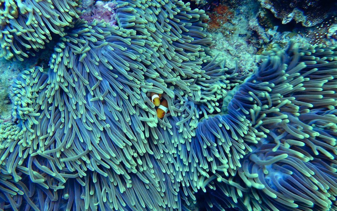 «Inserire la Grande barriera corallina tra i siti in pericolo»